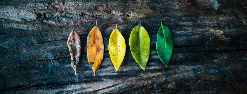 5 Steps for Leading Healthy Change at Your Church